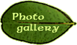 Fotogalerie