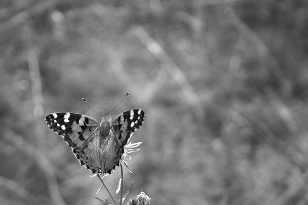 Kam půjdeš, až motýl mávne křídly?
