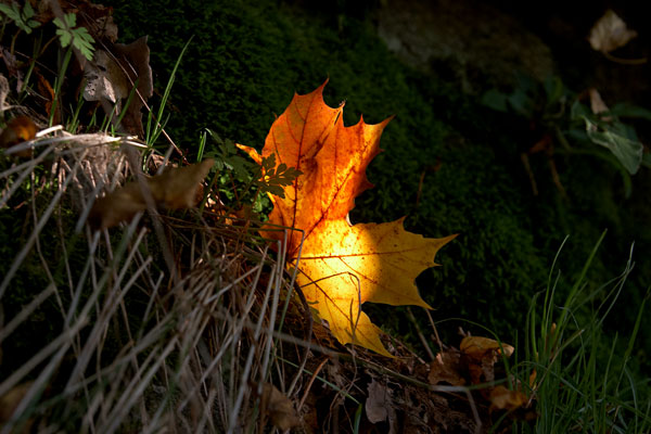 Podzimní záře