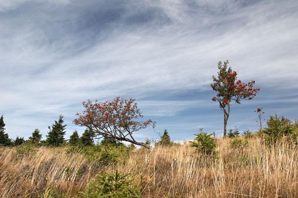 Near Velká Deštná hill
