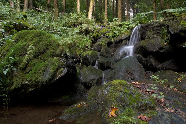 Potok pod tvrzištěm Hlodný